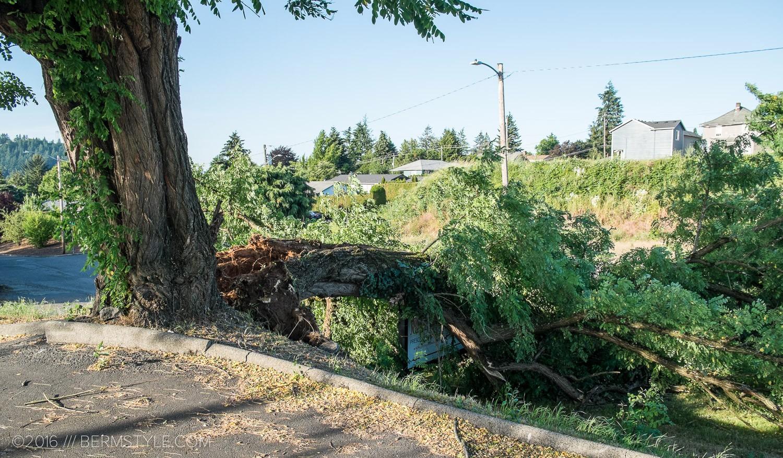 fallen-tree-pdx-3619