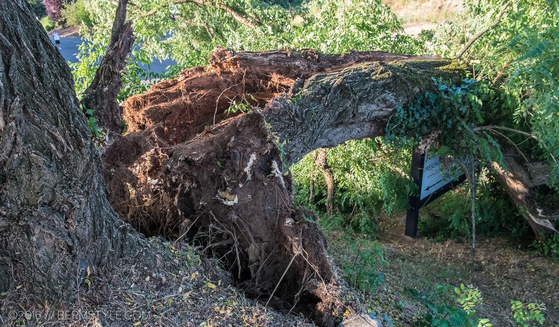 fallen-tree-pdx-3623
