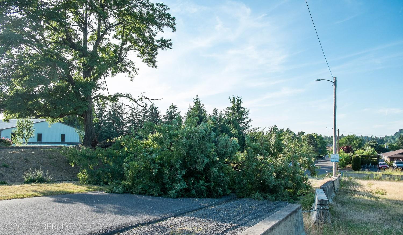 fallen-tree-pdx-3628