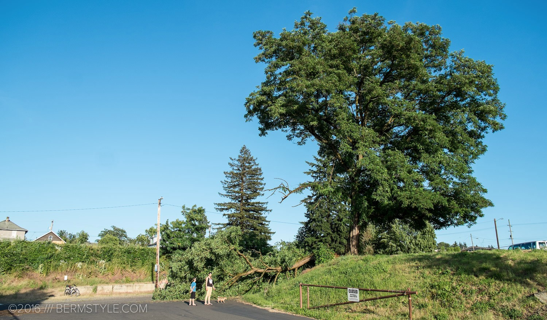 fallen-tree-pdx-3659