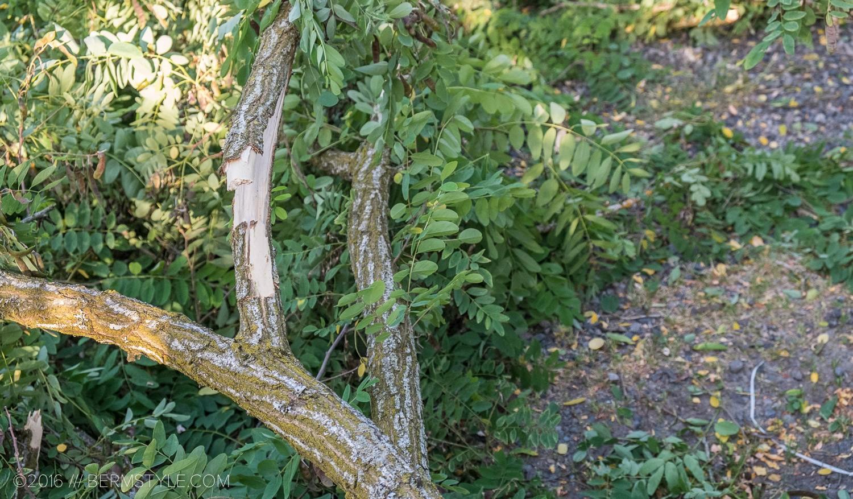 fallen-tree-pdx-3673