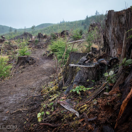 image for New Trail Construction at Klootchy Creek in Clatsop County, Oregon