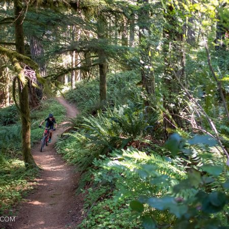 image for The Catamount Trail, Silver Falls State Park (Salem, OR)